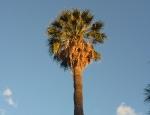 20120328 tree