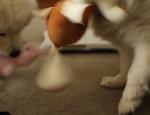 20120401 dog toys