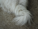 20120427 puppy tail
