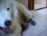 20120411 dog