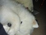 20120827 Mia's nose