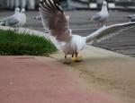 20120226-seagull